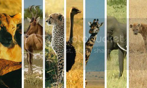animals_cover.jpg