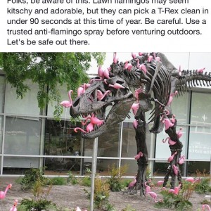 Pink Flamingo Attack!